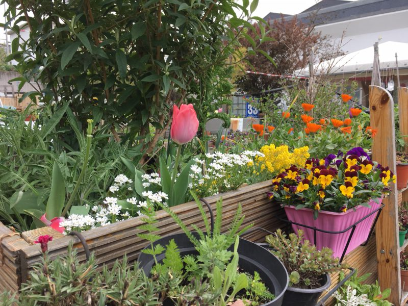 Pflanzen und Blumen in verschienenen Farben